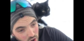 Sledding with my cat